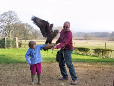 Picture of an eagle landing on the arm of a girl