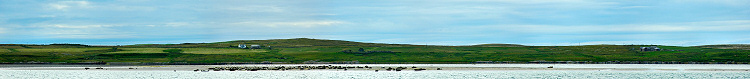 Picture of a panoramic view of seals sunning on a sandbank